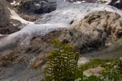 glacier_blanc