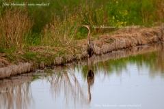 Uccelli 1