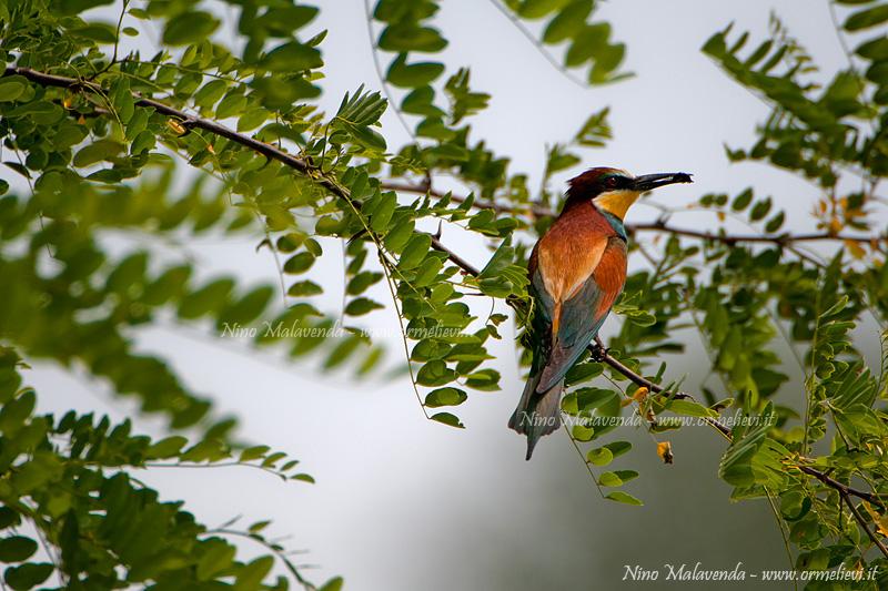 Uccelli 4