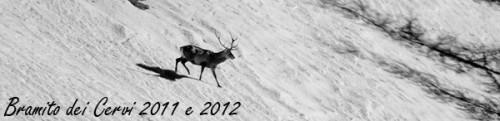 bramito del cervo 2011-2012